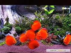 Aquascaping by Oleg Foht