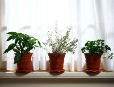 Forget the drugstore. Grow your own herbal pharmacy in your backyard!