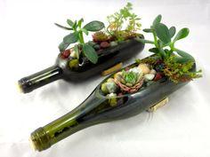 pots de fleurs en objets de récupération: succulentes en bouteilles