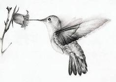 Image result for dibujo de colibri tatuaje