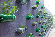 Spunky Urban Wall Garden Created From Recycled Plastic Soda Bottles- Maybe my herb garden! It'd be pretty cool! Plastic Bottle Planter, Recycle Plastic Bottles, Vertikal Garden, Recycled Garden, Bottle Garden, Soda Bottles, Recycled Bottles, Bottle Design, Cool Diy