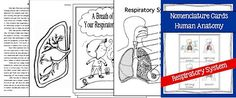 CHSH-Teach - Anatomy The Human Body Teaching Resources and Downloads