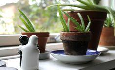 Conheça quais são as plantas mais apropriadas para cada tipo de cômodo da sua casa ou apartamento