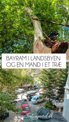 Bayram i Landsbyen og en mand der bor i et træ - TeaTougaard.dk Ramadan, Alanya