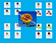 Parts of the Sunflower6 parts with labels6 parts without labels6 labels Print the lesson on card stock, laminate, and cut to separate the cards and labels.Blackline masters included.**Also check out our  popular sunflowers matching activity.