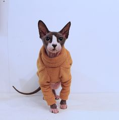 sphynx clothes clothes for cat clothers for animals pfinxcat