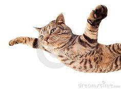Supercat flying