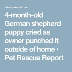 4-month-old German shepherd puppy cried as owner punched it outside of home • Pet Rescue Report