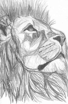 New cool art drawings sketches pencil ideas Pencil Drawings Of Animals, Cool Art Drawings, Art Drawings Sketches, Drawing Animals, Animal Sketches Easy, Drawing Ideas, Sketch Drawing, Sketches Of Animals, Pencil Sketching