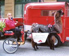 Central Oregon Llama Association:Driving Animal Science, Central Oregon, Alpacas, Sheep, Goats, Classroom, Activities, Animals, Class Room