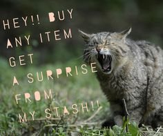 Jamberry. Yelling cat. Buy something, get surprise from my stash!!