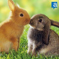 Buona Pasqua  www.advisato.com