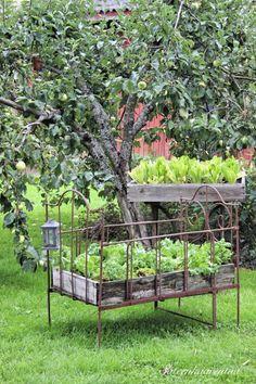 A bed of lettuce! Porch Garden, Garden Windows, Garden Landscaping, Water Plants For Ponds, Pond Plants, Herb Garden Design, Garden Art, Patio Pergola, Backyard