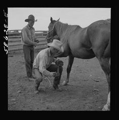 Removing horseshoes at the end of the summer season before turning the horses out on the range for the winter. In the corral at Quarter Circle U, Brewster-Arnold Ranch Company. Birney, Montana