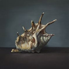 shell2. 20x20 oil. canvas on cardboard
