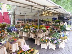 Flowers on the Saturday Market.   Delft - The Netherlands