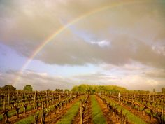 The vineyards just outside the office at Decanter Tours!