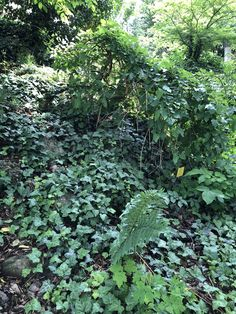 Hedera helix and Vinca minor will cover the less charming rock areas