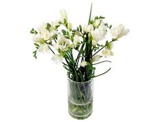 Simple, uncomplicated, beautiful. This White Freesia Bouquet is only £22.50 with free delivery included.