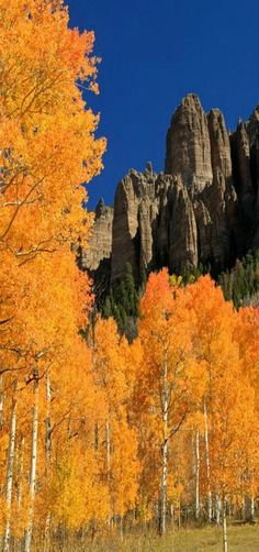 Pinnacle of Fall | A peek at some rock pinnacles along the Owl Creek Pass route east of Ridgway, Colorado, USA -by Jason Branz