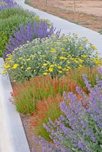'Summer Showstopper' can be planted as an