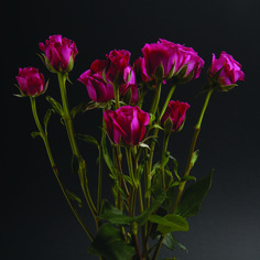 Hot Mayolika #RosesColombia #RedilRoses #ColombianFlowers #Roses #BlomFlores #Regalos