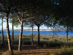 48 Ideas De Parc Natural De Las Lagunas De La Mata Y Torrevieja Torrevieja Guardamar Del Segura Lagunas