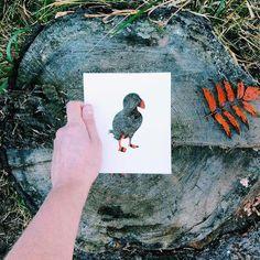 Животни с цветовете на природата