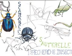 "Check out new work on my @Behance portfolio: ""Insecte robotisé"" http://be.net/gallery/46747607/Insecte-robotis"