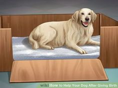 Image titled Help Your Dog After Giving Birth Step 2