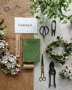 My Flower, Flower Power, Gardening Photography, Floral Photography, Flower Aesthetic, Long Weekend, Garden Plants, Floral Arrangements, Greenery