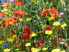 Image result for wildflowers photos