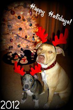 happy holidays from my boys Ranger & Steele<3