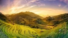 Rice fields on terraced in sunset at Mu chang chai, Yen bai, Vie - TouCanvas