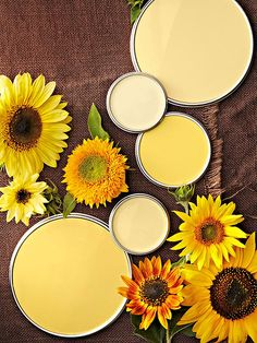 Cozy up with these hues drenched in a summer color palette with hints of nature: http://www.bhg.com/decorating/color/paint/yellow-paint-colors/?socsc=bhgpin032214sunfloweryellow