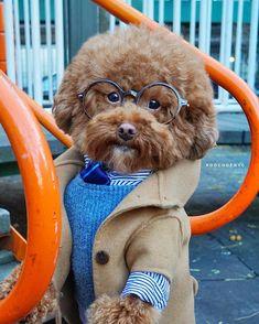 Yesh yesh very yummy enjoy Cute Little Puppies, Cute Dogs And Puppies, Cute Little Animals, Pet Dogs, Funny Animal Memes, Funny Dogs, Funny Animals, Funny Animal Pictures, Cute Pictures