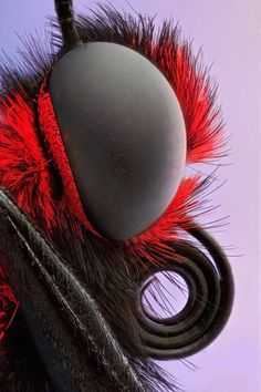 Pepe Lenovo, Insect World· Sophisticated Vision!.