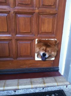 21 Dogs Who Aren't At All Guilty About What They've Done