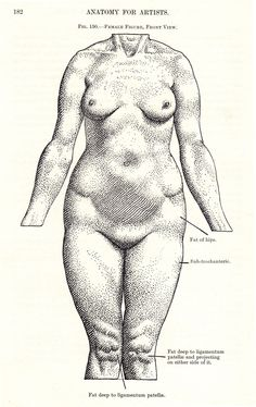 fat+front.jpg (1009×1600)