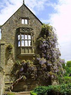 Wisteria at Nymans Garden, West Sussex, England