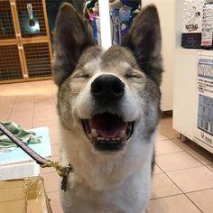 New保護犬 : pet salon Mignon DIARY