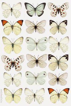 seidenfeins Blog vom schönen Landleben: DIY Sommerschmetterlinge aus Papier als Kranz * DIY paper summer butterflys on a wreath