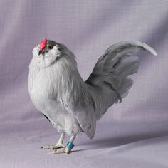 Chickens and Poultry: 20 Amazing Rare Chicken Breeds With Special Characteristics Types Of Chickens, Fancy Chickens, Raising Chickens, Chickens Backyard, Urban Chickens, Bantam Chickens, Chickens And Roosters, Beautiful Chickens, Beautiful Birds