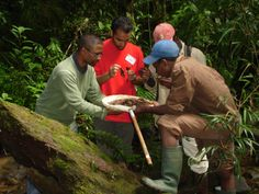 California University students sample for macro-invertebrates in the Namorana River in Ranomafana National Park, Madagascar. These small animals can be used as an indicator of stream quality and habitat disturbance.