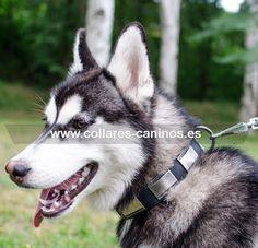 Moderno #collar de paseo cuero y metal  para #cachorros y perros grandes #Husky - >  39,00 € @fordogtrainers.es