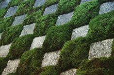 A nectar in a checkered pattern of moss and stone in Tofukuji. It is arranged in a geometric checkerboard pattern with stone and moss. The garden was planted in 1938 by a modern landscape architect, Mirei Shigemori, and is placed on all sides surrounding Hodogyo. Expressing Buddha Buddha, it is named Hassou's garden. It is a Karesansui garden that incorporates the abstract composition of modern art. #kyoto #京都 #tofkujitemple #東福寺 #garden #庭園 #moss #苔 #stone #石  #checkedpattern…
