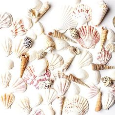 This helpful trick will show you how to clean seashells the RIGHT way! Get rid of the gunk and smell and display those beautiful seashells around your home!