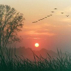 autumn by design d'autore. Best sound and site. The geese flying South. Hello fall!