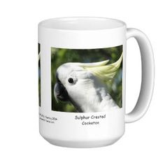 Sulphur Crested Cockatoo Classic White Coffee Mug - Australian Wildlife.  Click on photo to view item then click on item to see how to purchase that item.