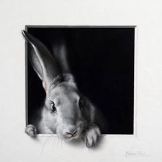 http://marinadieul.com/lapin-26-english/marina-dieul-animals.html